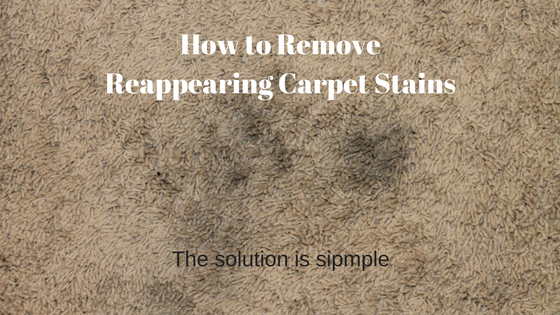 reappearing carpet stains